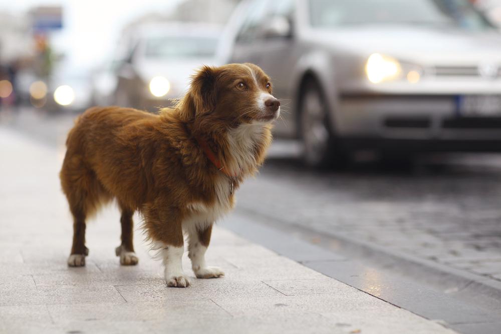 lostdog-1