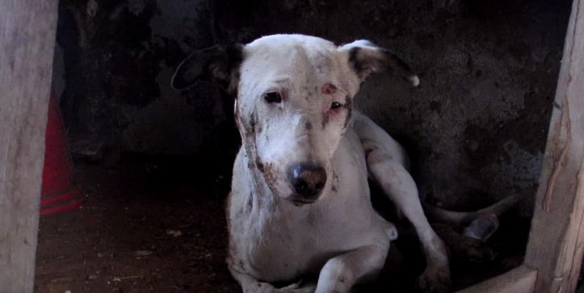 dog-alby-rescue-2