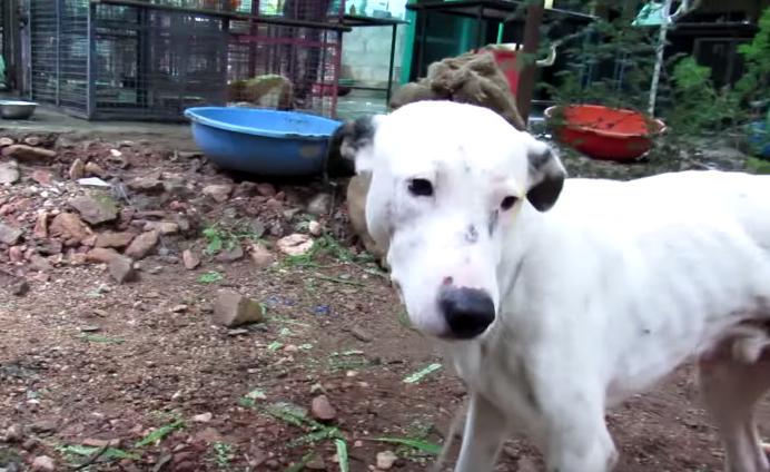 dog-alby-rescue-6