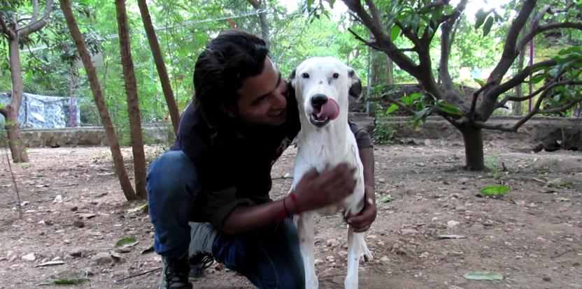 dog-alby-rescue-7