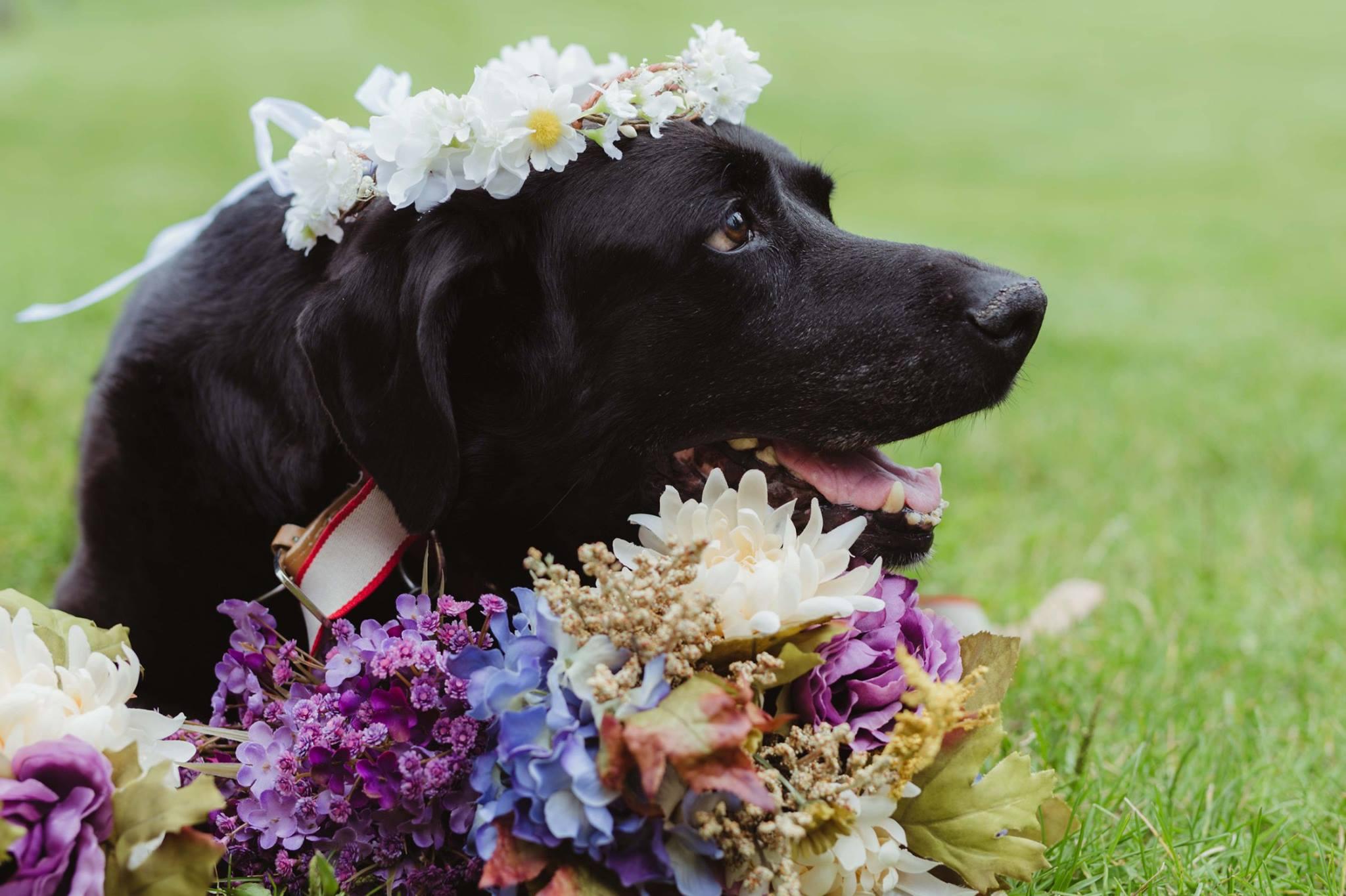 dog-charlie-wedding-6