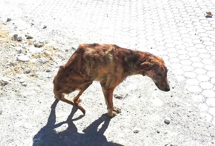 dog-injured-2