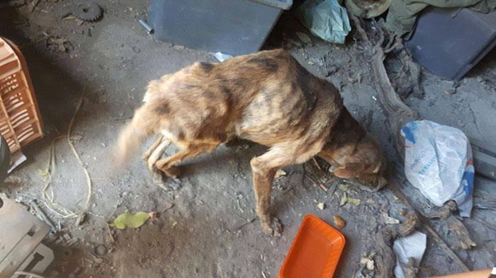 dog-injured-4