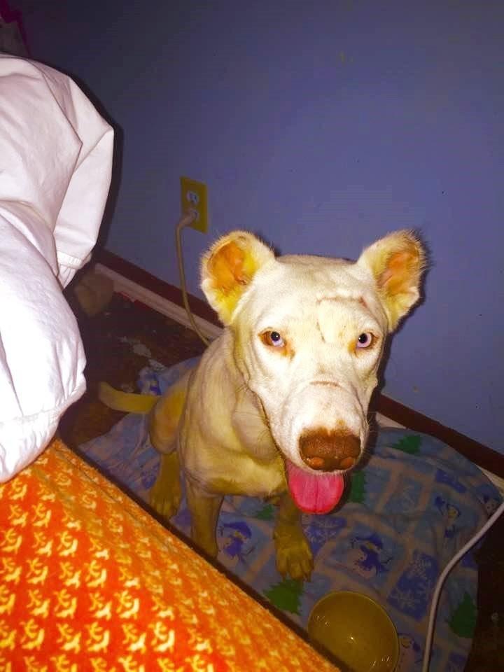 dog-niya-rescue-3