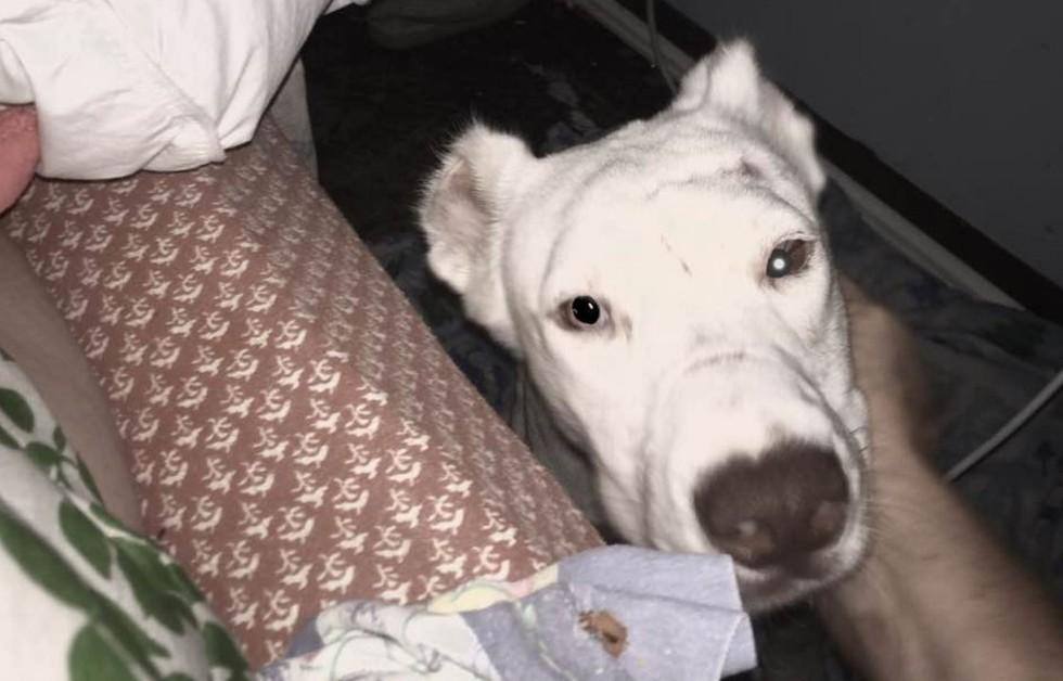 dog-niya-rescue-4