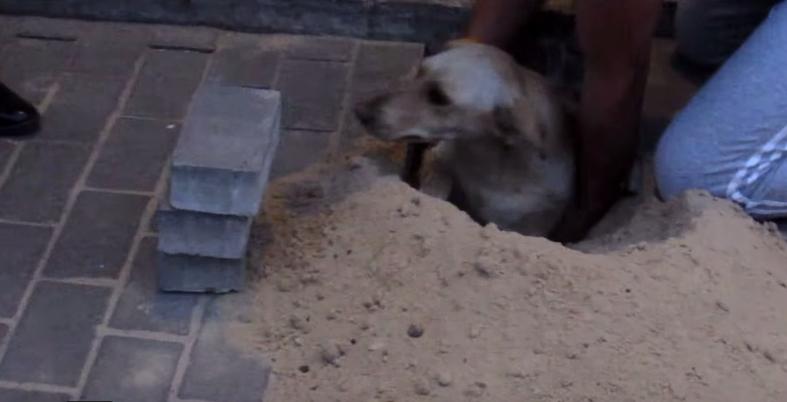 dog-squirrel-buried-4