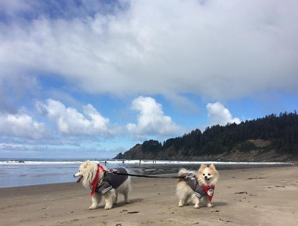 dogs-zen-hoshi-7