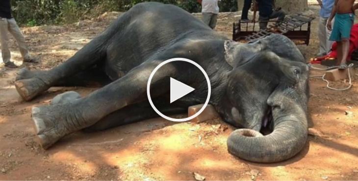 elephant-cambodge-epuisement-1