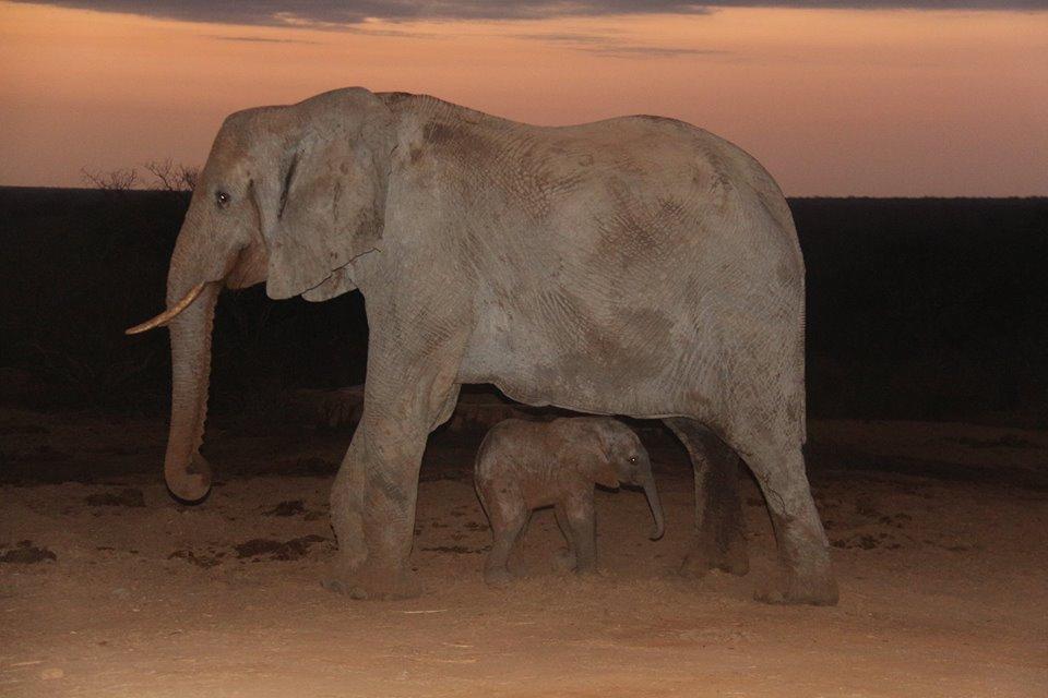 elephant-gawa-baby-1