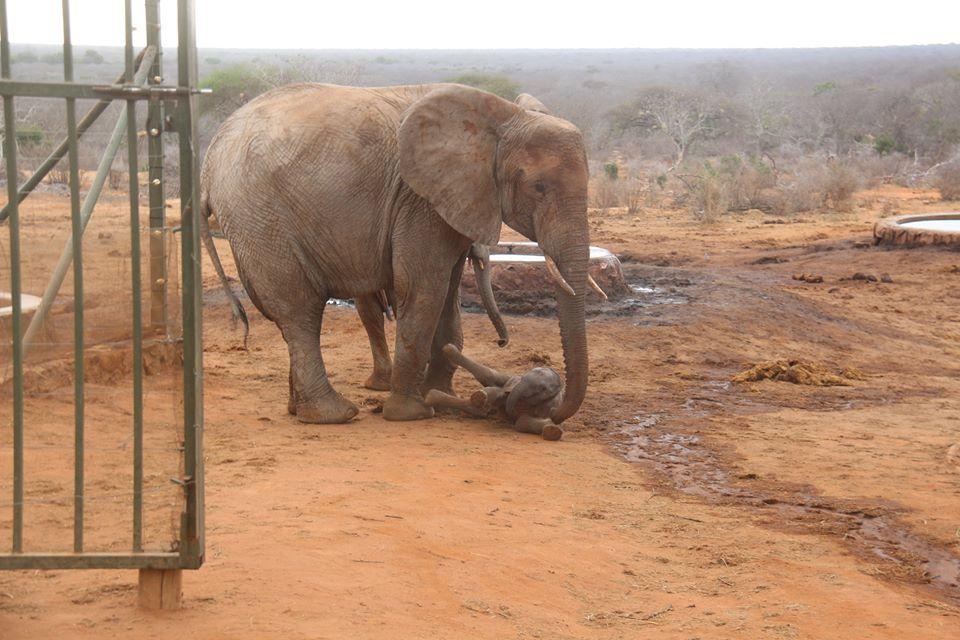 elephant-gawa-baby-3