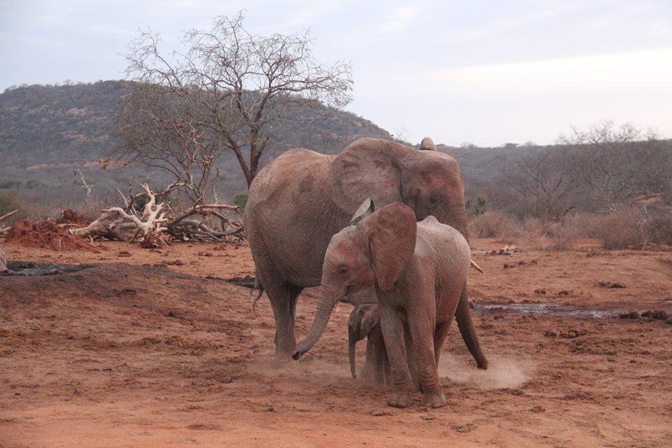 elephant-gawa-baby-5