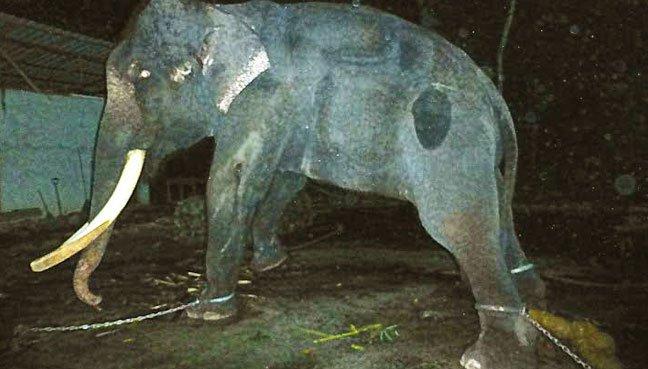 elephant-lasah-malaysia-3