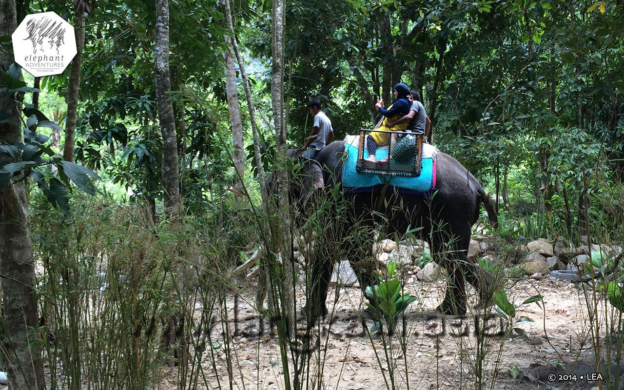 elephant-lasah-malaysia-5