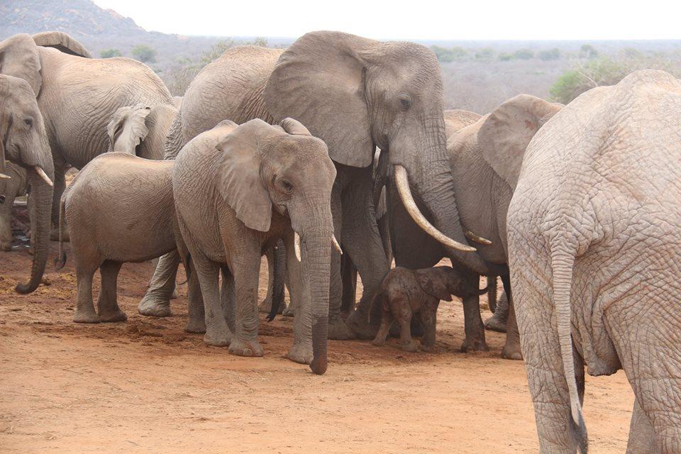 elephants-gawa-baby-4