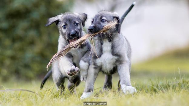 first-twin-puppy-1