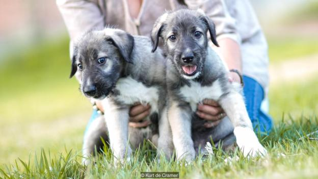 first-twin-puppy-2