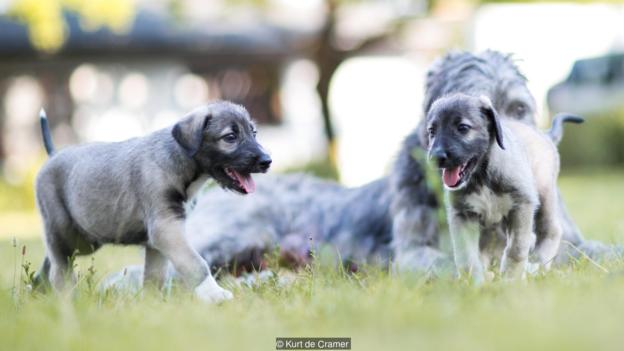 first-twin-puppy-3