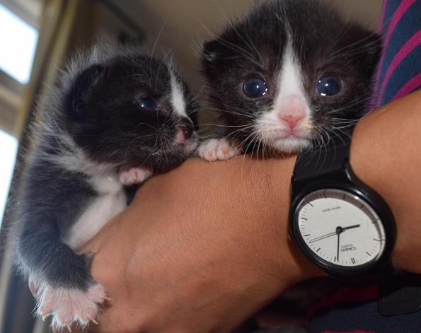 kittens-garbage-3