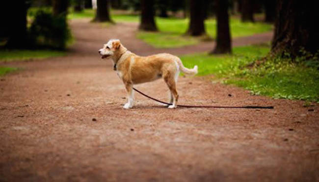 lost-dog-2
