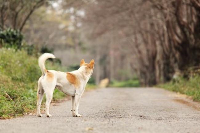 lost-dog-7