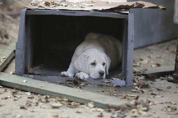 lost-dog-8