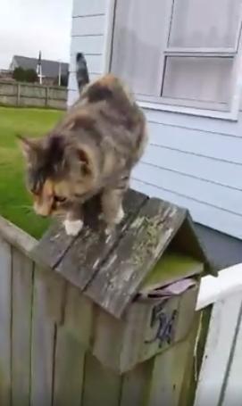 postman-cat-friends-1