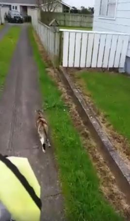 postman-cat-friends-3