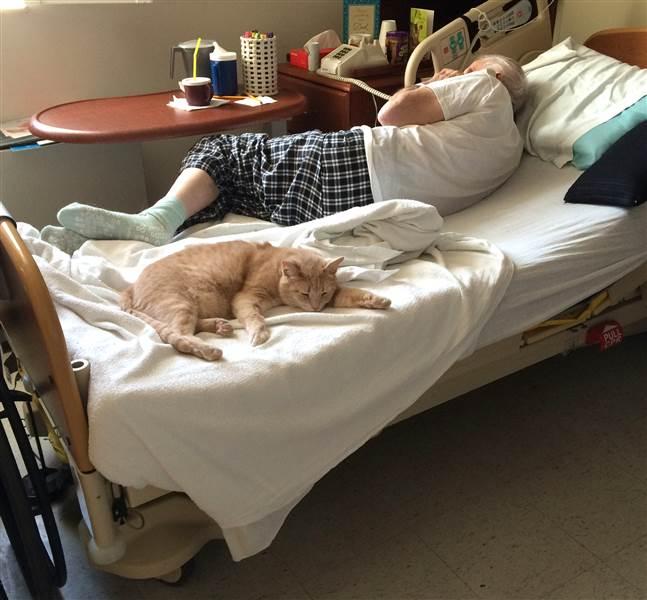 tom-cat-hospital-3