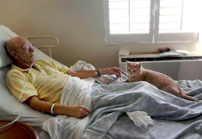 tom-cat-hospital-5