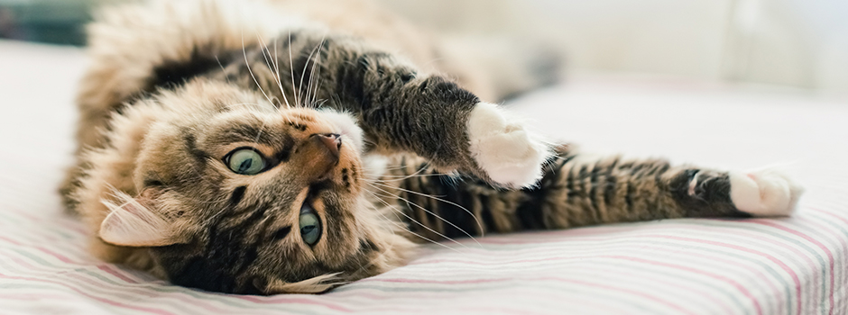 cat-bodylang-lifestyle-9