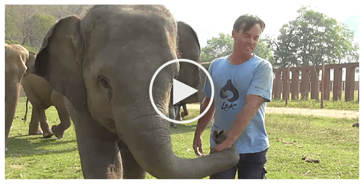 baby-elephant-thailand-cover