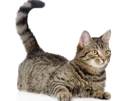 cat-bodylang-lifestyle-1