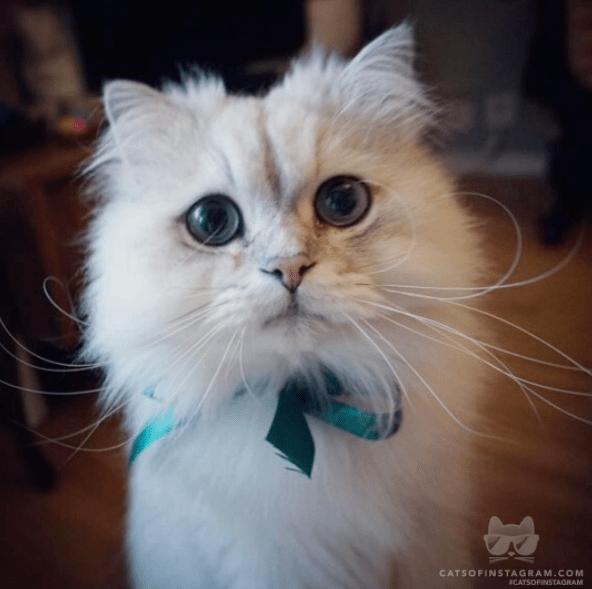 5 Tips To Understanding Your Cat's Body Language