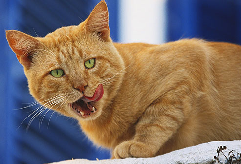 cat-bodylang-lifestyle-7