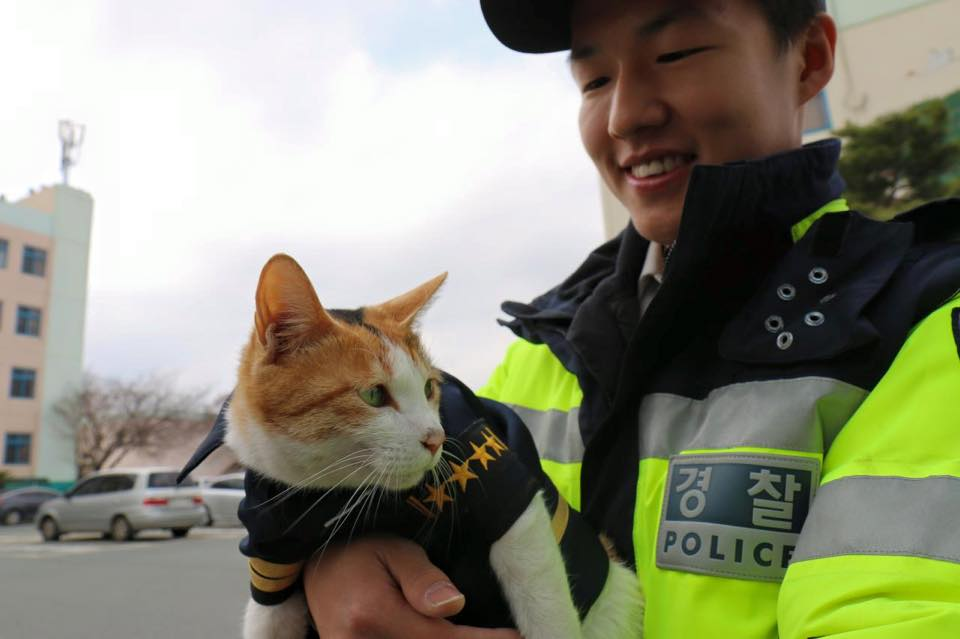 cat-molang-police-1