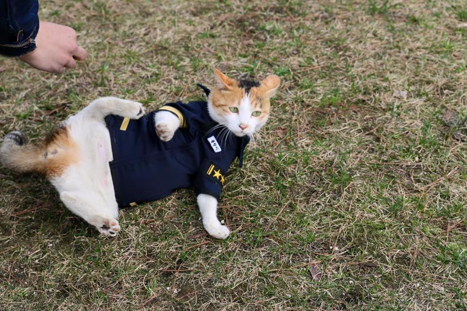 cat-molang-police-7