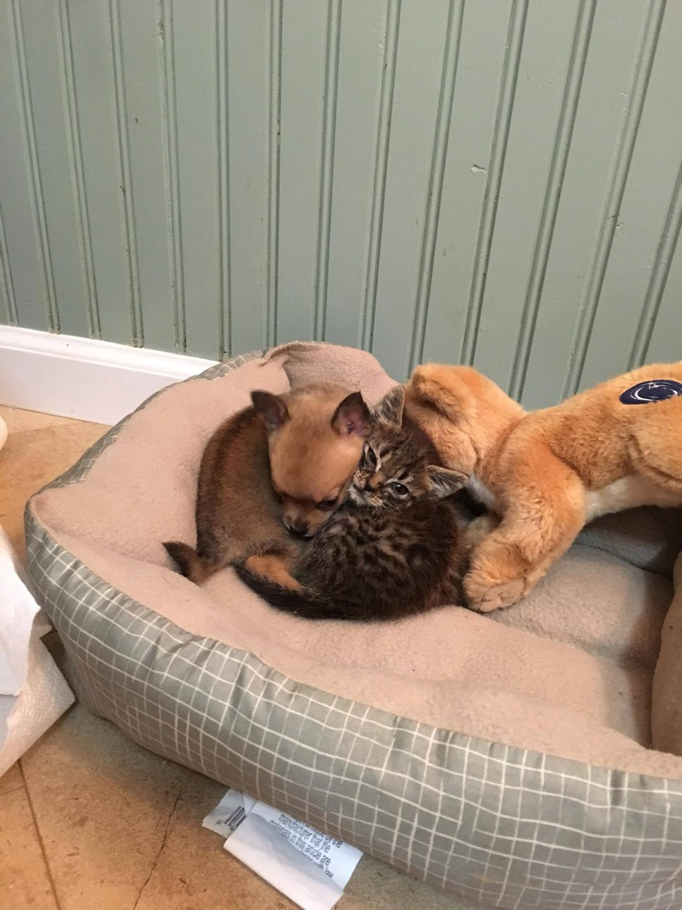 Puppy And Kitten Save Each Other And Melt Our Hearts