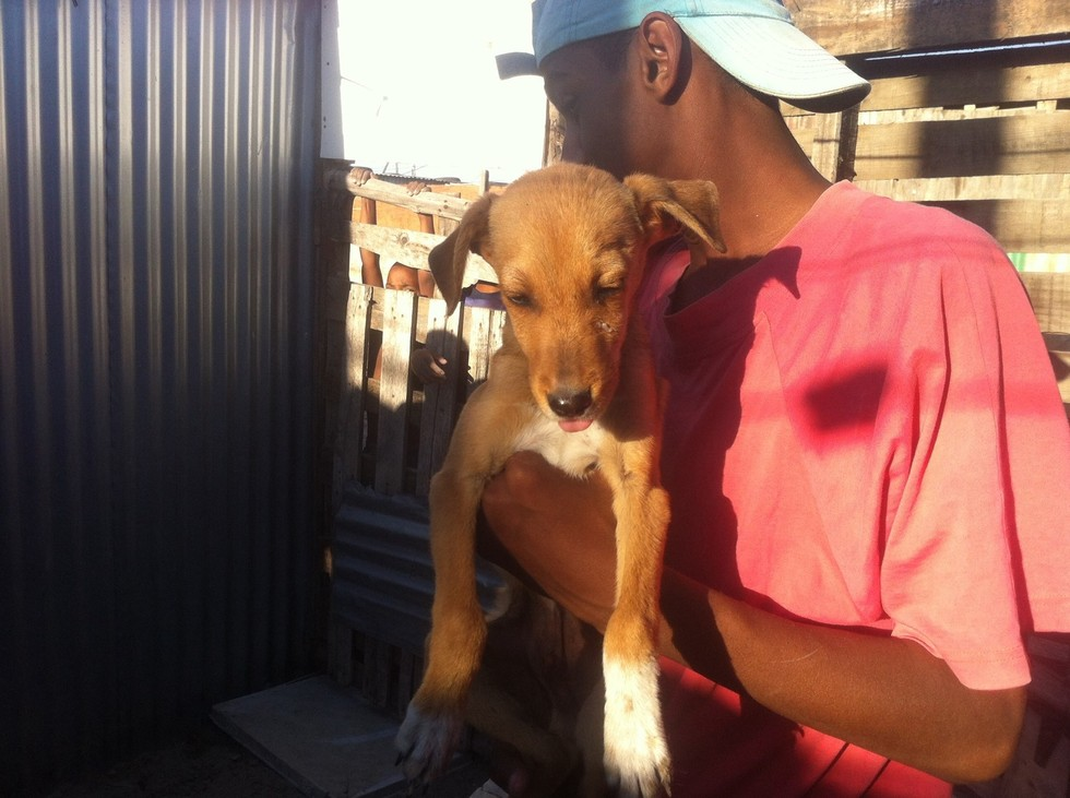 dog-bailey-rescue-1