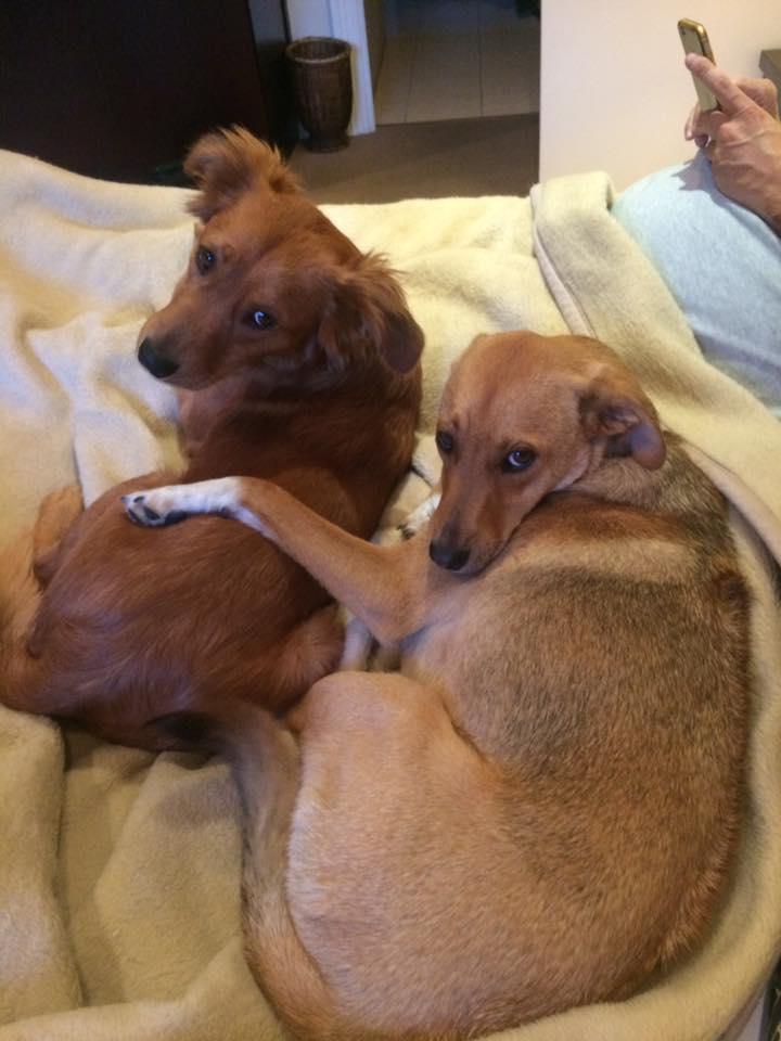 dog-bailey-rescue-10