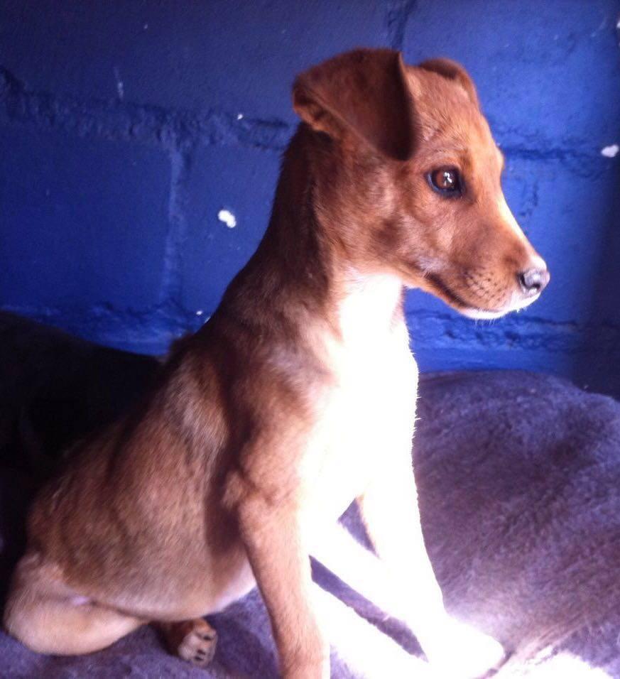 dog-bailey-rescue-2