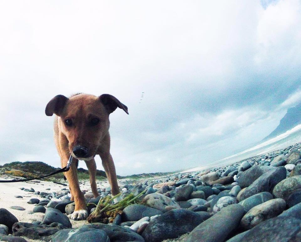 dog-bailey-rescue-6