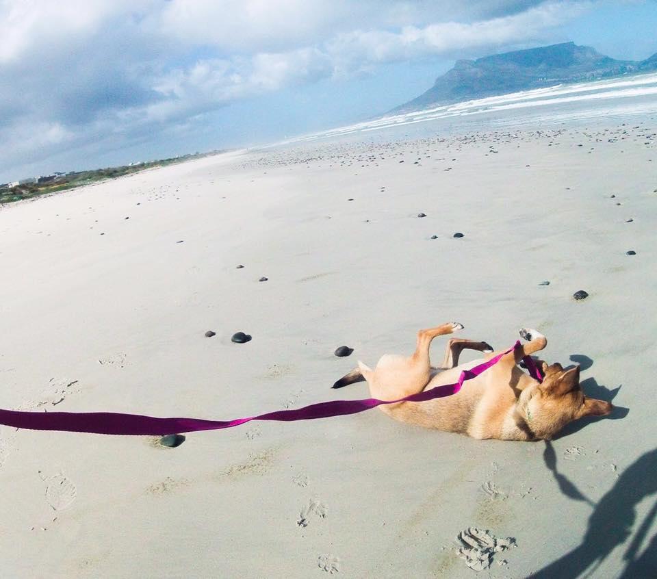 dog-bailey-rescue-7