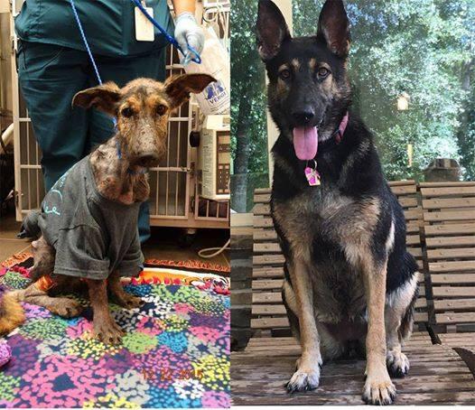 dog-frannie-rescue-8