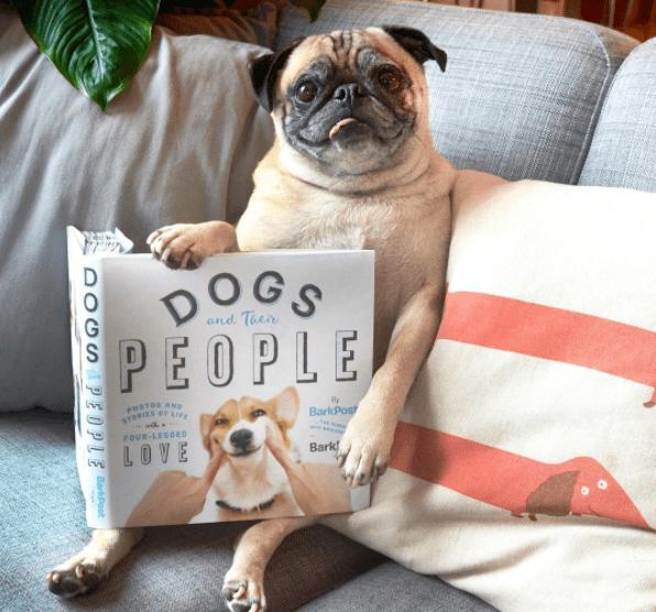 dog-love-lifestyle-2