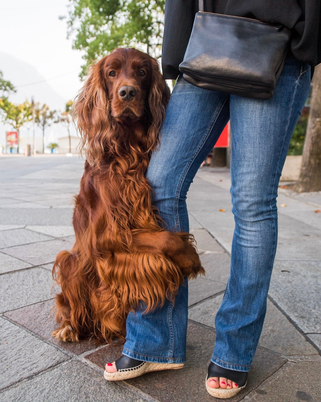 dog-love-lifestyle-7