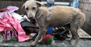 dogs_rescue_pasay_3
