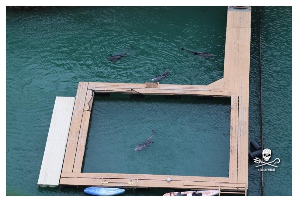 dolphin-taiji-1