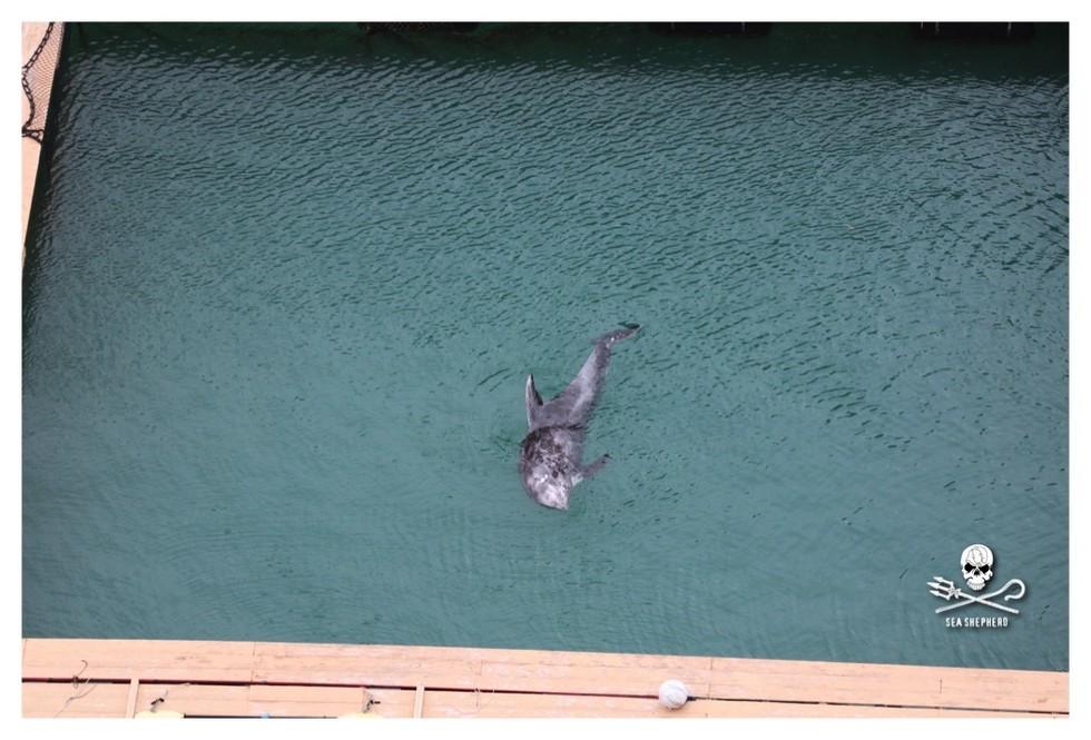 dolphin-taiji-3