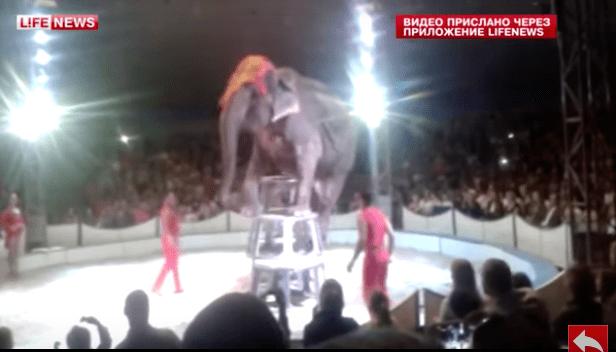 elephant-circus-fall-3