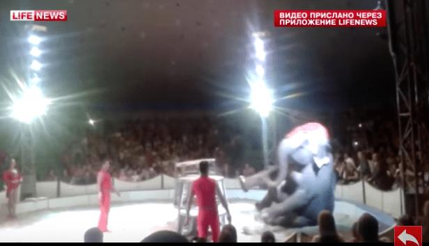 elephant-circus-fall-4